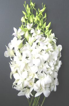 Fresh Flowers - White Dendrobium Orchids  Price: $23.95