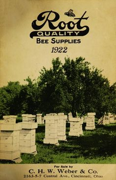 """""""Root quality bee supplies,"""" 1922"""