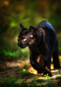 Ricardo the Cat ;) - ❤
