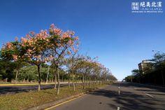 非常喜歡淡海這邊的路都是這樣的開闊,路中央也都種了滿滿的欒樹,或小葉欖仁... 零壓迫感,看了就非常輕鬆愉悅。 - 攝於濱海路