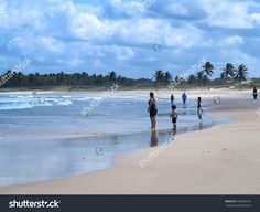 French Beach Alagoas Brazil Stock Photo 498396163 : Shutterstock