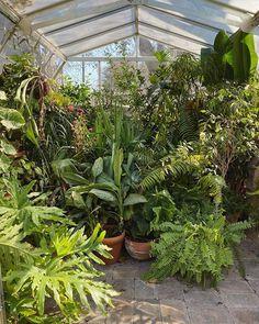 81 Best Greenhouse Plants Images