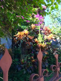 Detalle de un jardín. Asunción-Paraguay