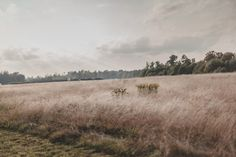 "kellyelainesmith: "" Cherry Springs State Park © Kelly Smith Photography """