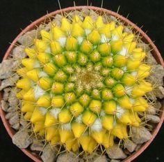 Las plantas suculentas nos permiten disfrutar de un sinfín de formas y texturas.