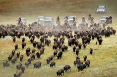 Western South Dakota has been named a Best destination in the US for 2015 by Lonely Planet.