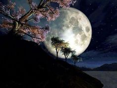 the moon and the cherry tree