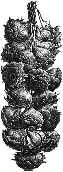 Garlic Bulbs by Trevor Haddrell. Wood engraving