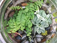 Custom Made Terrarium http://www.facebook.com/pages/American-Plant/111708498851820  http://www.americanplant.net/index.php