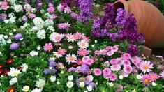 Цветник с ранней весны до поздней осени