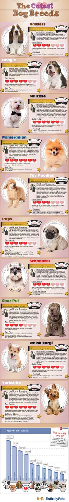 'The Cutest Dog Breeds' #infographic #dogs - no doubt controversial and probably unreliable unscientific market research if relying on opt-in facebook input!
