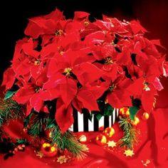 ODSTRÁNTE SI ZUBNÝ KAMEŇ A VYBIELTE ZUBY LEN ZA 4 MINÚTY | Božské nápady Euphorbia Pulcherrima, Christmas Wreaths, Christmas Tree, Holiday Decor, Pictures, Home Decor, Xmas, Teal Christmas Tree, Photos