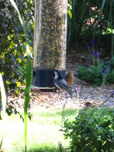 Feathered Friends, Nuthatch & Sparrow