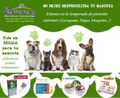 #oferta del mes de Junio de la Clínica Veterinaria Safracan de #yecla por la compra de productos anti parásitos regalo para tu mascota '¡ ven e infórmate!