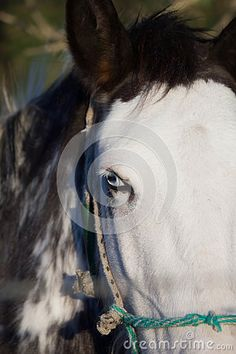 Beautiful Horse - Download From Over 47 Million High Quality Stock Photos…