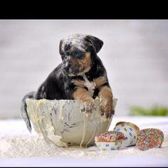 PuppyCakes!