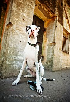 i want to take a picture like this of my great dane!