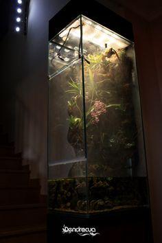 """""""Liusha"""" - Terrarium by DendroAcua. Actualizamos el estado del terrario en columna de Carlos desde que realizamos su montaje a domicilio. Poco a poco, vamos viendo como este proyecto va madurando. La gran mayoría de las plantas están afianzadas a la..."""
