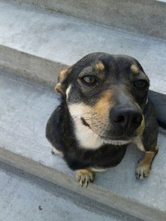 My cute doggie <3