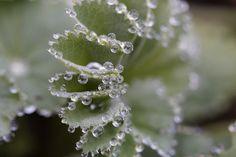 나뭇잎에 물방울이 스팽글처럼 찬란하게