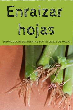 🌵How to reproduce succulents by leaves [en 5 PASOS]⭐️ Cacti And Succulents, Planting Succulents, Indoor Garden, Outdoor Gardens, Mini Cactus, Plants Are Friends, Miniature Plants, Green Life, Growing Plants