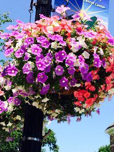 Trees, Natural, Flowers, Plants, Pictures, Photos, Florals, Photo Illustration, Plant