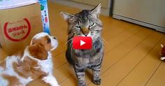 This Kitty Is Such A Gem! Watch How Well He Handles The New Kid. I Lost It At 0:19!   The Animal Rescue Site Blog