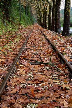 paisagens de outono - Pesquisa Google