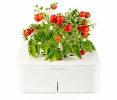 Electronic Smartpot by Click and Grow