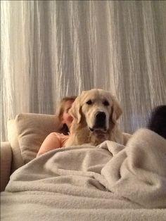 Oscar on the sofa