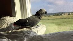 Bird Is Abandoned After 17 Years — Because Her Owner Got A New Boyfriend