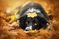 Beautiful Autumn picture w/ sweet pup...