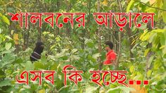 শালবনের আড়ালে এসব কি হচ্ছে । Bangabandhu Sheikh Mujib Safari Park Anti Social, Safari, Activities, Park, Music, Youtube, Musica, Musik, Parks