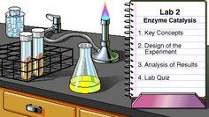 Enzynme catalysis