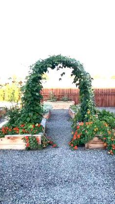 Backyard Vegetable Gardens, Vegetable Garden Design, Rose Garden Design, Vegetable Garden Planning, Outdoor Gardens, Garden Yard Ideas, Garden Projects, Kitchen Garden Ideas, Cool Garden Ideas