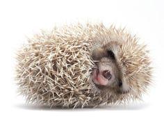 hedgehog heaters | Hedgehog House