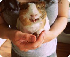 Smiling piggie!