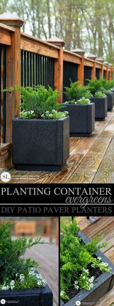 Planting Container Evergreens - DIY Patio Paver Planters @miraclegro #ad #readysetgro