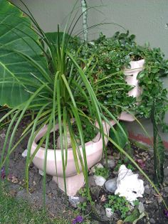 Maceta hecha de escusado reutilizado para jardin exterior
