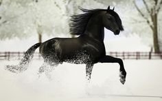 This is a black sims 3 friesian horse in the white snow!!!