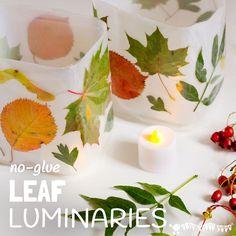 LEAF LUMINARIES