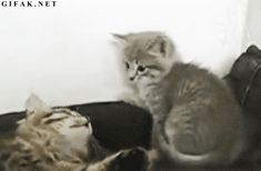 Click to see the full Gif.    Kitty punch ftw!