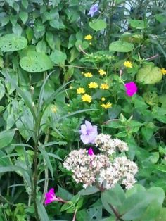 Butterfly & Hummingbird & Bee Flower Bed - Today in the gardens - 8-30-2013