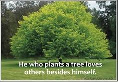 Image result for gardening quotes and sayings
