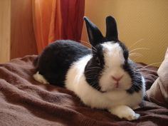 Mon petit lapin Noisette