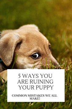 10 Absolute Must Haves for New Dog Owners Rescue Animals