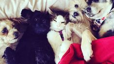 Pin By Shokolani On Cats Dogs Adventure Cat Cats Dog Life