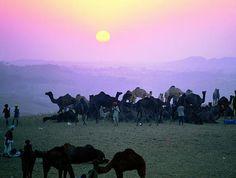 La foire aux chameaux de Pushkar