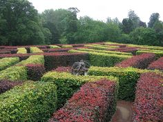 The maze at Scone in Scotland uses two colours of hedges for a very distinctive look. Actually I think this is one of the most beautiful mazes in the world. The statue at the centre is beautiful and the star shape of the maze is stunning from the sky.