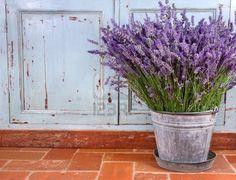Profumo Di Lavanda In Un Ambiente Rustico Decorativo Foto Royalty Free, Immagini, Immagini E Archivi Fotografici.  #TuscanyAgriturismoGiratola